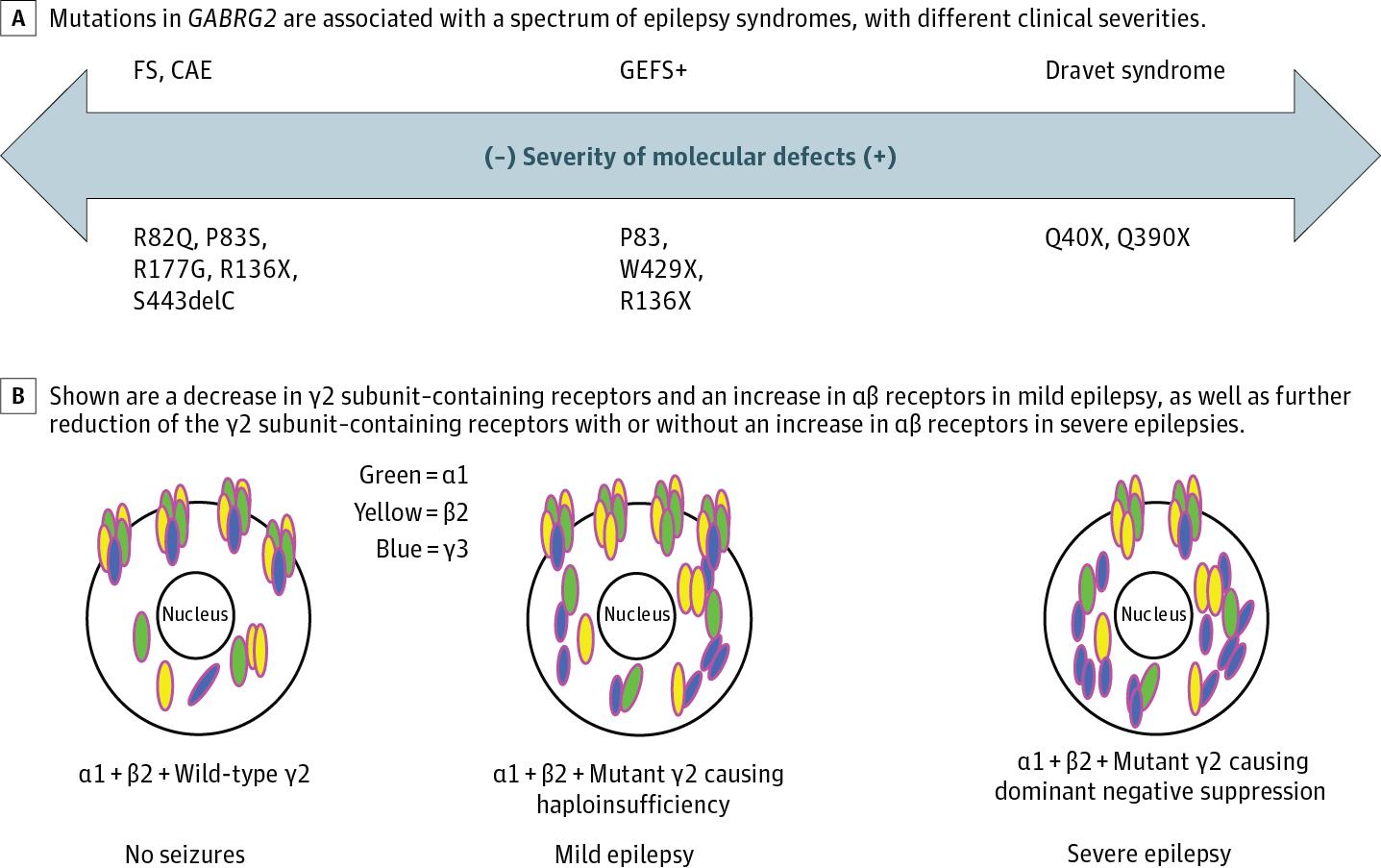 Molecular Pathogenic Basis for GABRG2 Mutations Associated With a ...